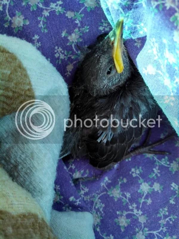 photo Tif Phone 650.jpg