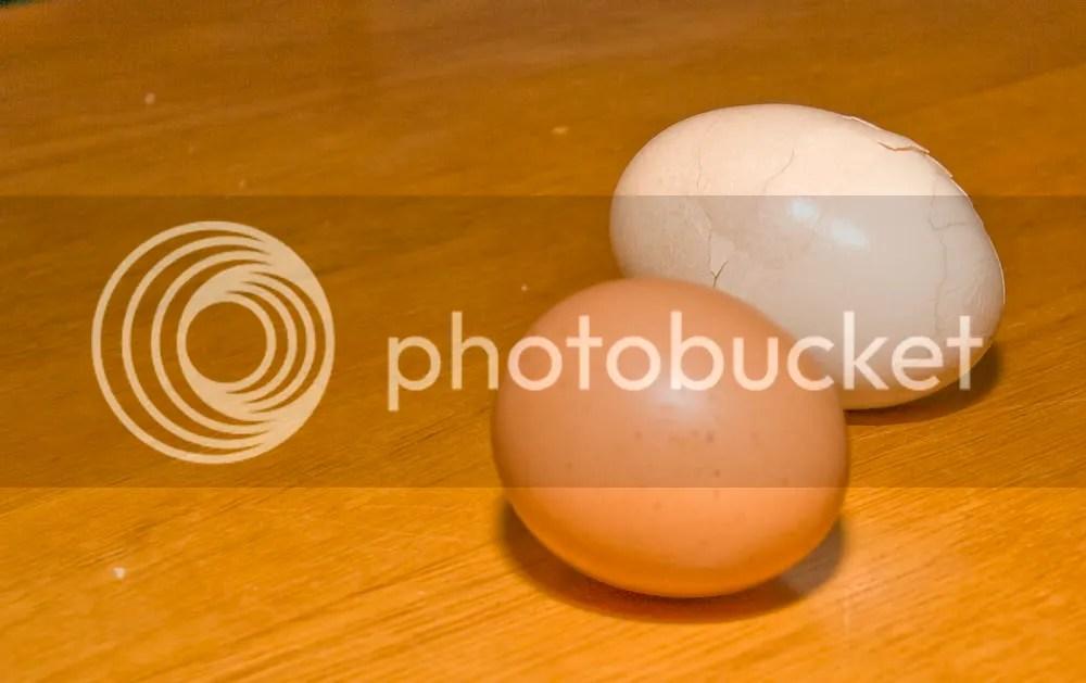 Wanda's Double-yoke egg