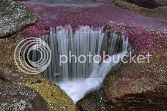 27 Gambar Cano Cristales Sungai Colombia Digelar Sungai Tercantik Di Dunia