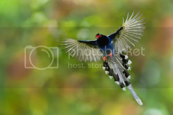 photo bird-photography-sue-hsu-13__880.jpg