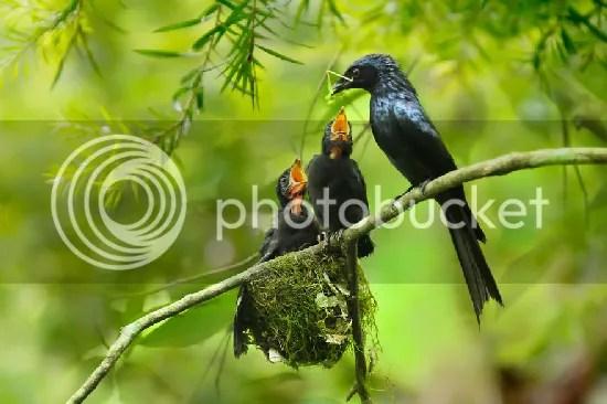 photo bird-photography-sue-hsu-14__880.jpg