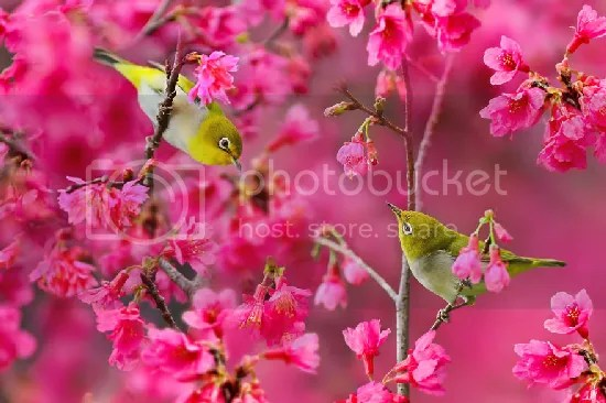 photo bird-photography-sue-hsu-2__880.jpg