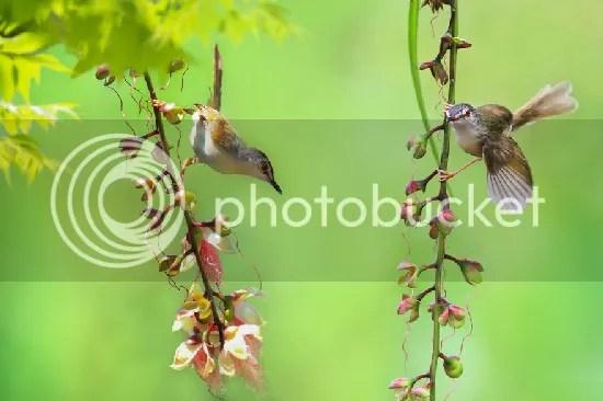 photo bird-photography-sue-hsu-3__880.jpg