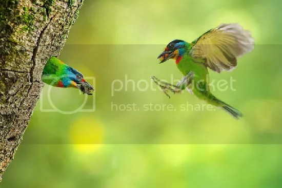 photo bird-photography-sue-hsu-8__880.jpg