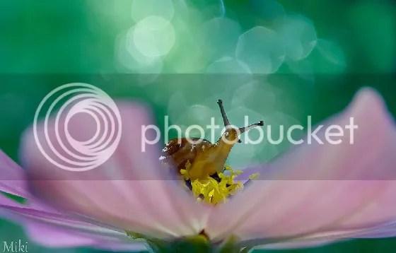 photo 09-BULQxUe.jpg