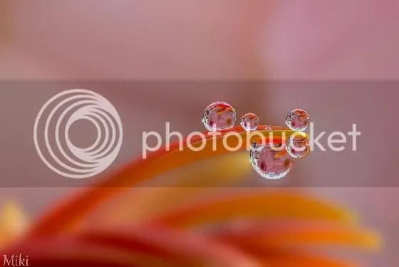 photo 12-1mgv1Cd.jpg