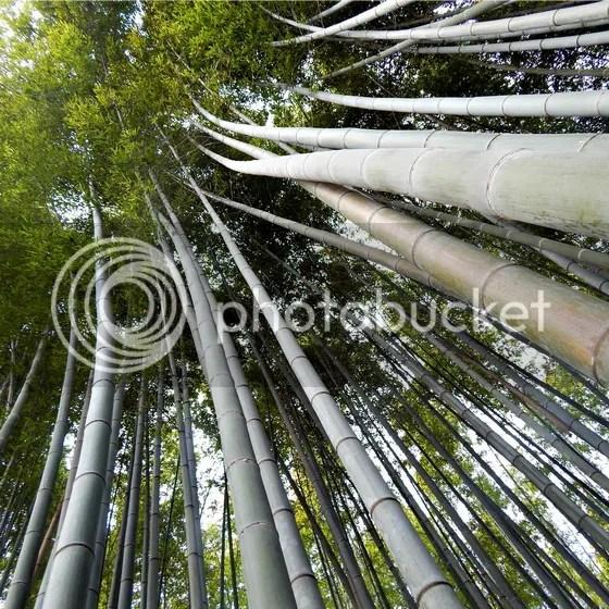 photo japan60.jpg