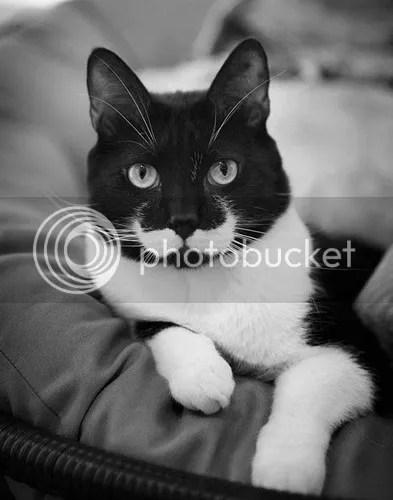 photo animals-with-mustache-2.jpg