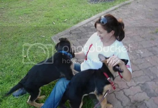 sharifah sofea anjing