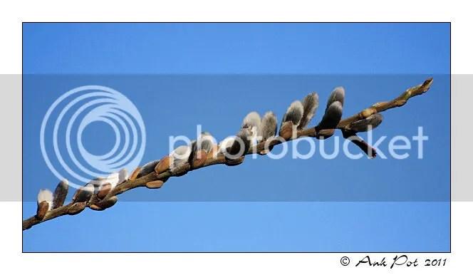 Log20-3-11-1.jpg