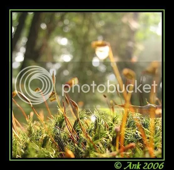 Log22-9-06-8.jpg