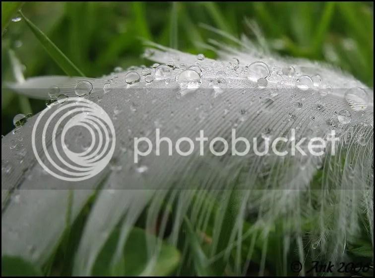 Log24-9-06-2.jpg