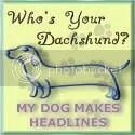 My Dog Makes Headlines