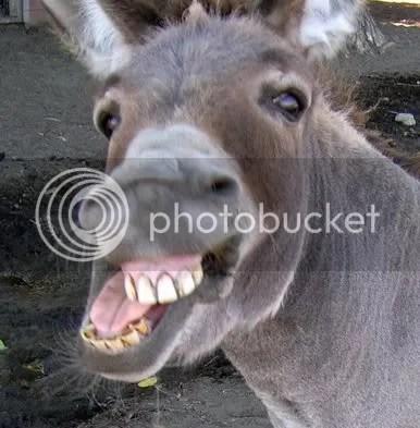 Tu és burro, hein?