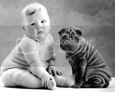 Esto es un sharpei (no, el niño no, el perro)