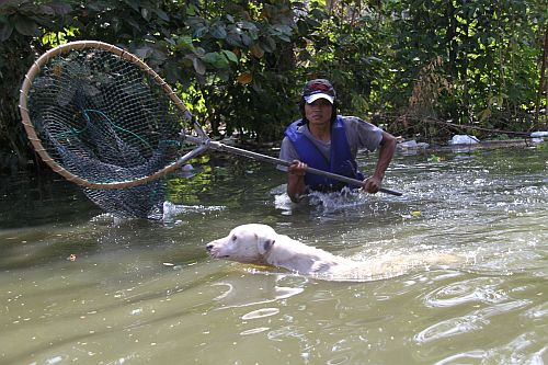Image Result For Rescue Thailand