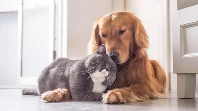 Kedi ve köpek sahipleri arasındaki 5 fark - Hayat Haberleri