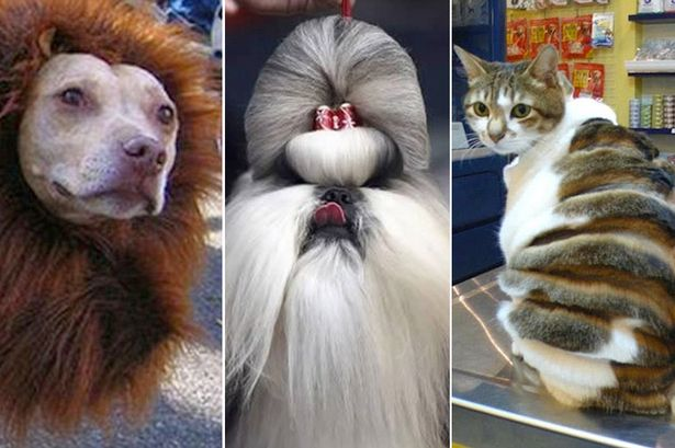 Meet The Dog With A Mane And The Beehive Cat 9 Seriously