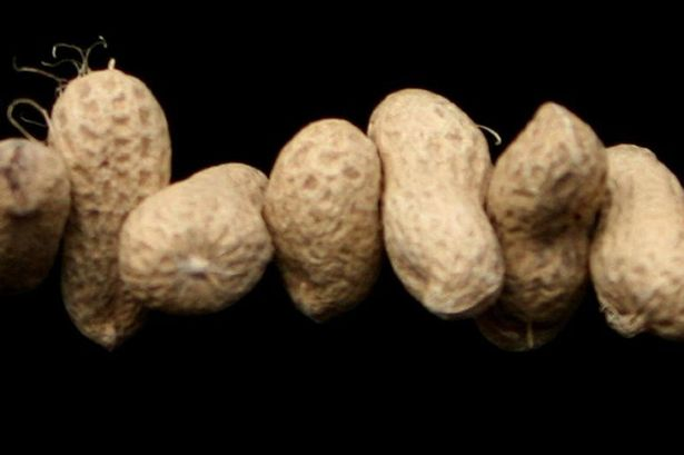Generic photo of some peanuts