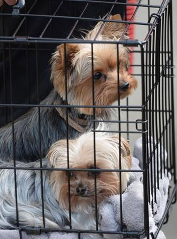 Johnny Depp's dogs Pistol and Boo Boo