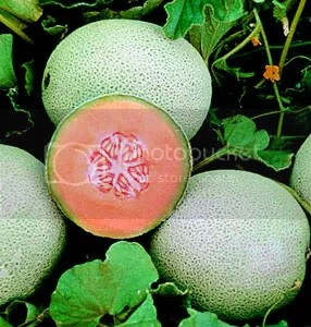 cantaloupe Pictures, Images and Photos