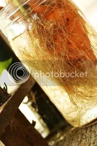 https://i0.wp.com/i4.photobucket.com/albums/y128/curlieqcarriek/IMG_0236a2.jpg