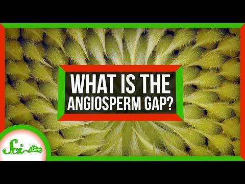 """Solving the 70 Million Year """"Gap"""" in Flower Evolution"""