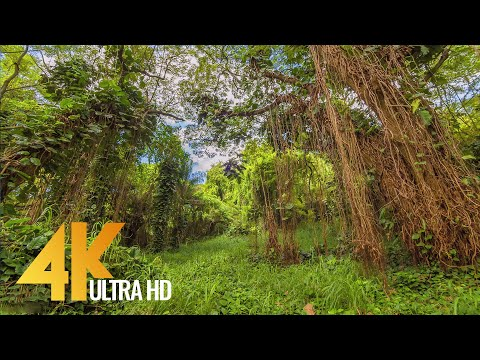 4K Amazing Forests of the United States - Short Preview Video with Soothing Music