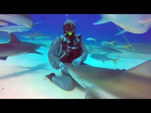 瞬間讓鯊魚睡覺