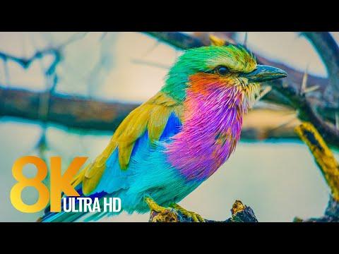 African Wildlife in 8K - Discover Botswana Wild World - Relax Video + African Wildlife Sounds
