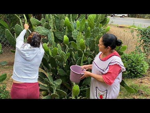 Carnita de Puerco con Nopales con Chile Colorado De Mi Rancho A Tu Cocina