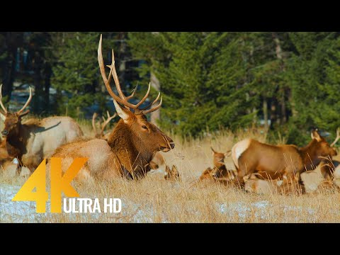 Amazing Canadian National Parks in Wintertime 4K UHD - Short Preview Video