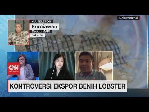 Kontroversi Ekspor Benih Lobster