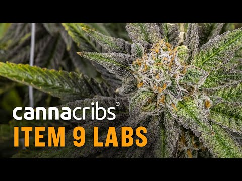Arizona Processor: Item 9 Labs, Produces Delta 8 THC Cartridges and Award-Winning Extracts