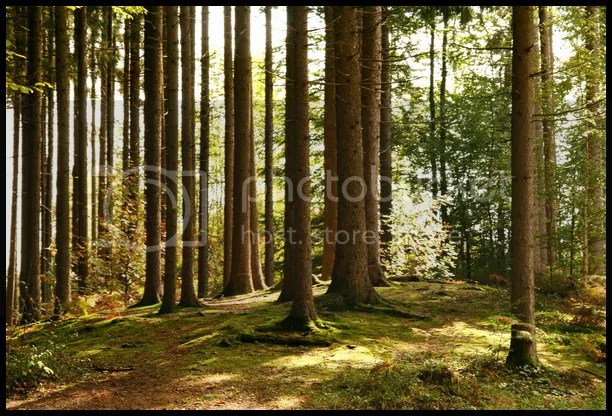 drvece 2