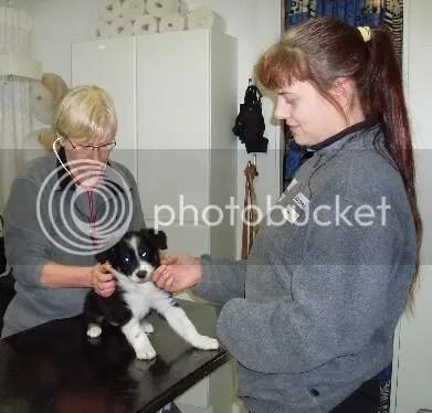 Git blir veterinärbesiktad