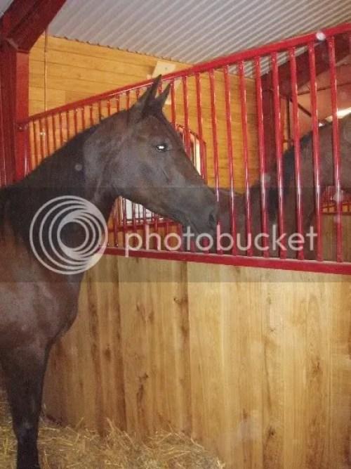 Luna d'Oro var allra först att flytta in i stallet!