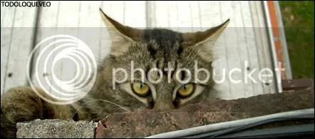INFORMACIÓN. Tuve un gato que se llamó Pessoa y un dia se murió y yo sufri tanto que aún sigo roto.