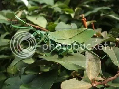 origami, jepang, serangga