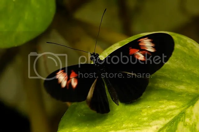 Mariposas056.jpg image by Sese111