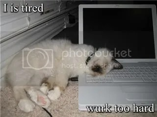 Tiredlolcat