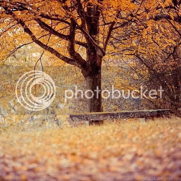 Orange Leaves fall