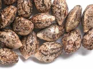 Hybrid Cannabis Seeds