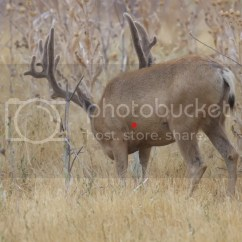Whitetail Deer Shot Placement Diagram E30 Wiring Vitals 3d Types
