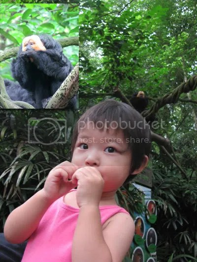 singapore zoo, singapore places to go, family, kids, nature, animals