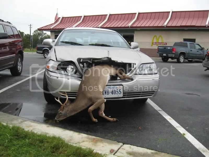 deer smashed grill of