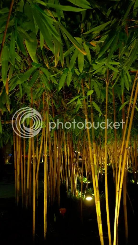 bamboos at night