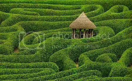 Maze garden Pictures, Images and Photos