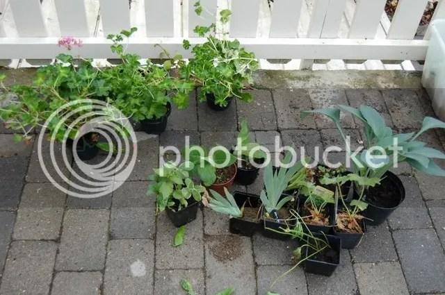 Nye planter 29.06