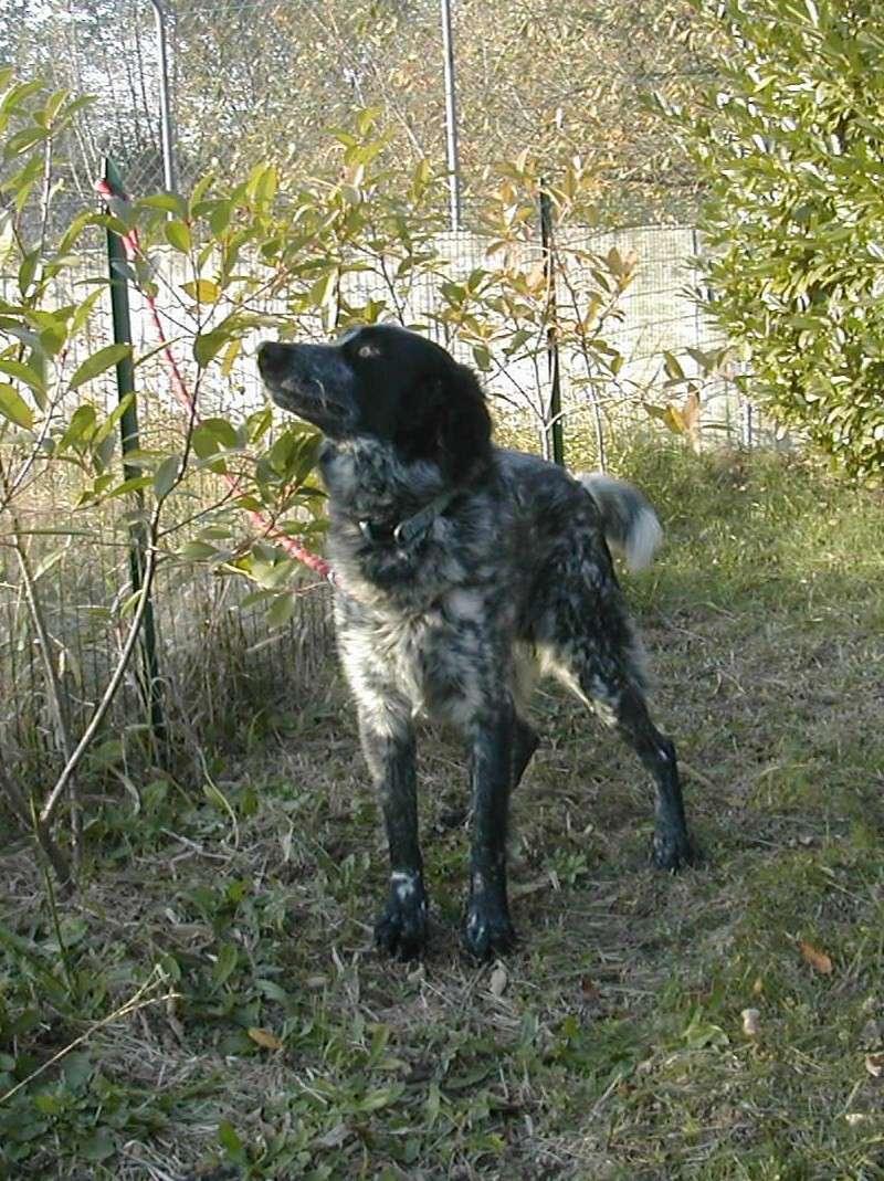 Segnalazioni per chi cerca un cane da adottare  Pagina 6  Forum di Giardinaggioit